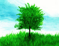 Green tree on grass in watercolor. Green tree on grass in watercolor paint Royalty Free Stock Photos