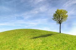 Green Tree on Green Grass Field Under White Clouds and Blue Sky stock photography
