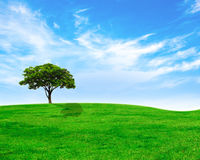 Green tree on green grass and  sky Royalty Free Stock Image
