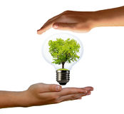 Green tree growing in a bulb. With hands Royalty Free Stock Photography