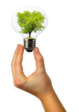 Green tree growing in a bulb. Isolated on white background Royalty Free Stock Photography