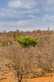 Green Tree Growing between Desert Area and Dead Trees, South Africa Royalty Free Stock Images