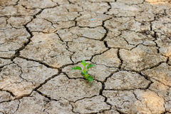 Green tree growing through dry cracked soil. Fresh green tree growing through dry cracked soil Stock Photo
