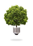 Green tree growing out from a bulb Stock Photo