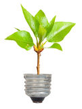 Green tree growing out of a bulb Royalty Free Stock Photo