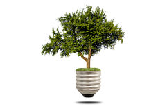 Green tree growing out of a bulb Royalty Free Stock Images