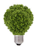 Green tree growing out of a bulb,Green energy concept Royalty Free Stock Photos