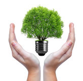 Green tree growing out of a bulb in hands Royalty Free Stock Photography