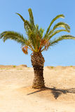 Green tree grows in arid soil alone in the desert areas. Small green tree grows in arid soil alone in the desert areas Stock Photography