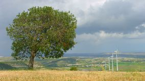Green tree grows in field, wind turbines spin, beautiful landscape, time-lapse. Stock footage stock video footage