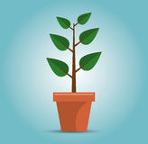 green tree growth concept Stock Images