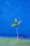 Green tree growth from concrete wall Stock Photos