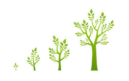 Green tree growth eco concept Stock Photo