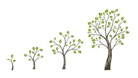 Green tree growth eco concept. Tree life cycle Stock Photo