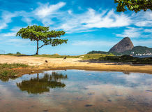 The green tree and Guanabara Bay on the background of Sugarloaf Mountain, Rio De Janeiro, Brazil royalty free stock image
