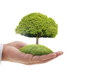Green tree in hand Royalty Free Stock Photo