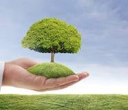 Green tree in hand Stock Photo