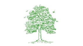 Green tree hand draw stock video footage