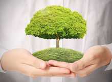 Green tree in hand Stock Photography