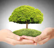 Green tree in hand Royalty Free Stock Image