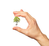 Green tree in the hand on white Royalty Free Stock Image