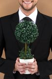 Green tree in hands of smiling man. Royalty Free Stock Photo