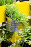 Green tree hanging basket against a yellow building royalty free stock images