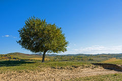 green tree on the hill Royalty Free Stock Images