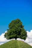 Green tree on a hill in front of the blue sky Royalty Free Stock Images