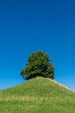 Green tree on a hill in front of the blue sky Stock Photo