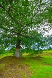 Green tree on a hill stock images