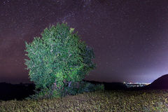 Green tree on a hill under night sky with. Royalty Free Stock Photography