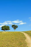 green tree on the hillside Stock Photography