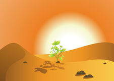 Green tree in hot desert. An illustration of a small, green tree growing under the hot sun in a dry, desolate desert Royalty Free Stock Image