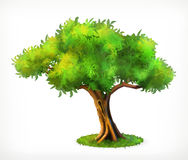 Free Green Tree Icon Stock Photography - 72788112