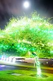 Green tree illuminated Royalty Free Stock Images