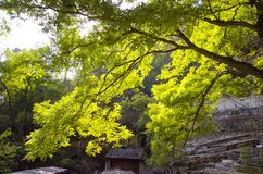 Green tree illuminated by sun in Mountain. Shangfangshan Yellow Mountains, Global Geopark of China. It is one of China`s major tourist destinations. Mountain Stock Image