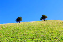 Green tree. Image of beautiful landscape with green tree Royalty Free Stock Images