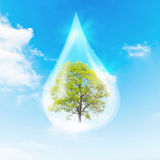Green Tree inside a clean drop of water Royalty Free Stock Photo