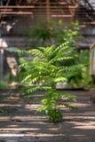 Green tree inside industrial interior Stock Image