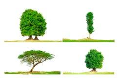 Green tree isolate on white. Background Stock Photo