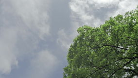 Green tree isolated on the blue sky and clouds stock video footage