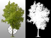 Cut out green tree