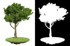 Green Tree Isolated on White Background. Stock Photos