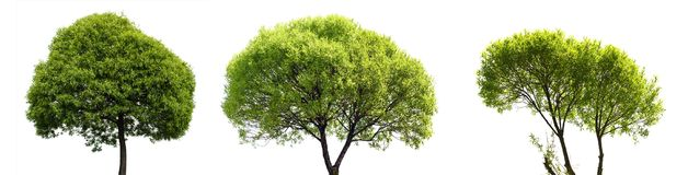 Green Tree Isolated on White Background Royalty Free Stock Photography