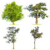 Green tree isolated in white Stock Photo