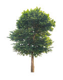Green tree isolated on white. Background with clipping path Stock Images