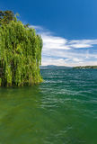 The green tree on a lake Garda with mountains as Royalty Free Stock Photography