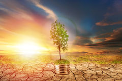 Green tree in lamp on dry soil Royalty Free Stock Images