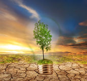 Green tree in lamp on dry soil Royalty Free Stock Image